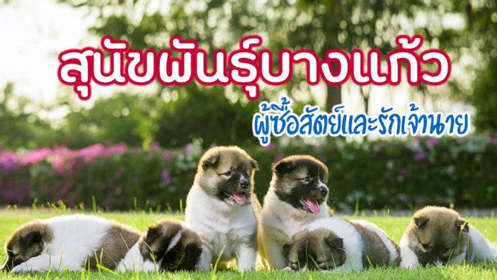สุนัขพันธุ์บางแก้ว-001