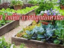 9 ไอเดีย การปลูกผักสวนครัว-002