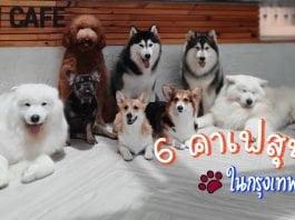 12- 6คาเฟ่สุนัข ในกรุงเทพ-001