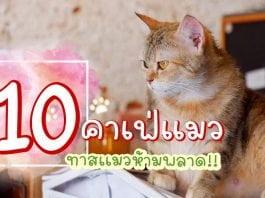 16-ทาสเเมวห้ามพลาด 10 คาเฟ่แมว-001