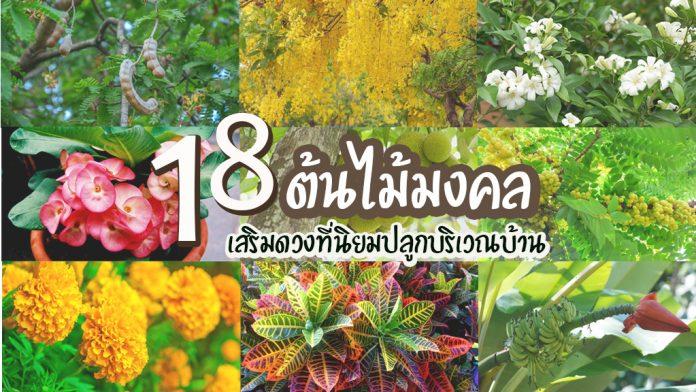 19-18ต้นไม้มงคลเสริมดวง-001