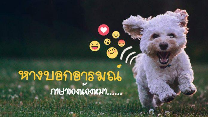 28-หางน้องหมา บอกอารมณ์