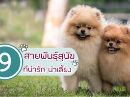 31-9สายพันธุ์สุนัขที่น่ารักน่าเลี้ยง-002