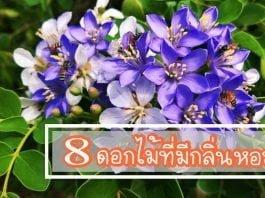 33-8 ดอกไม้ที่มีกลิ่นหอม